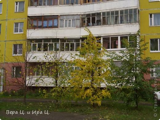 Художник покрасил листья на деревьях. фото 2