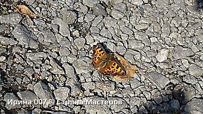 По дороге к церкви увидела бабочку. А т.к. мой дружок - фотик со мной, решила ее сфоткать. Да еще осенью...  Приятного просмотра! фото 2