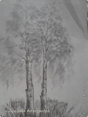 Рисунок Берёзки