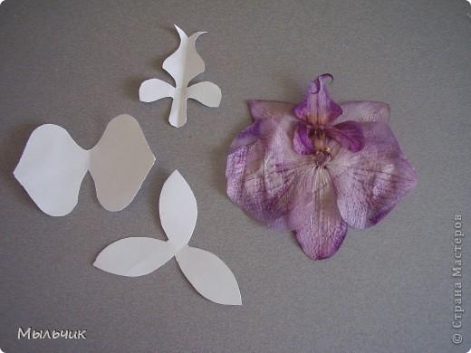 Орхидея Фаленопсис. фото 2