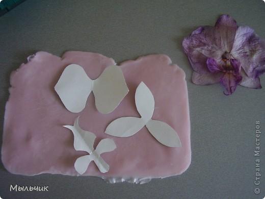 Орхидея Фаленопсис. фото 4
