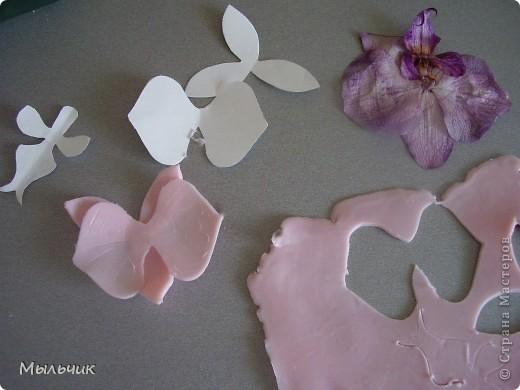Орхидея Фаленопсис. фото 6