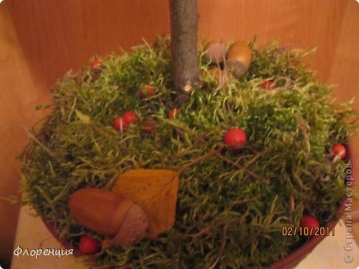 Вот такое шишко- дерево, мы с сыном сделали в школу на Осеннюю мозаику. Идея, конечно же, подсмотрена здесь, в Стране, на одной из рукодельных улиц, которых тут огромное количество! Спасибо всем идейным вдохновителям! Это первая серьезная наша поделка, поэтому прошу строго не судить...))) На её создание у нас ушло три дня, так как мы натыкались на все грабли, которые, наверное, только можно было придумать! Выкладываю  те рабочие моменты, которые привели к удачным результатам. фото 17