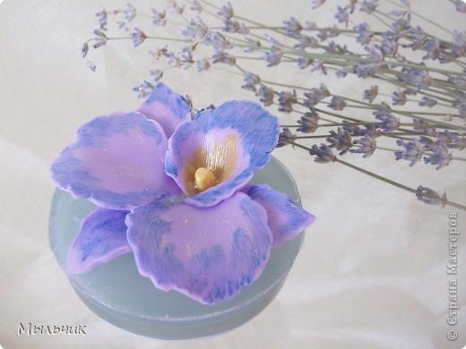 Орхидея Фаленопсис. фото 9