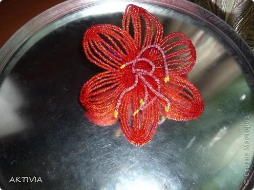 аленький цветочек фото 4