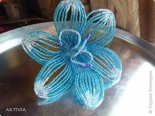 аленький цветочек фото 2