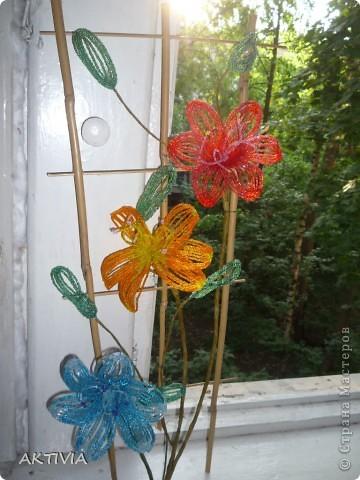 аленький цветочек фото 6