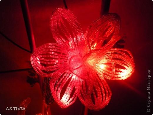 аленький цветочек фото 8