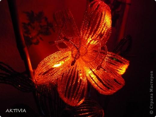 аленький цветочек фото 9