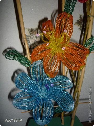 аленький цветочек фото 7