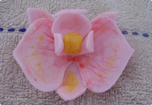 Орхидея Фаленопсис. фото 7