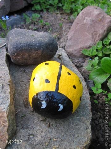 Божья коровка - камушек. Живёт на камне рядом с игрушечной лягухой. фото 1