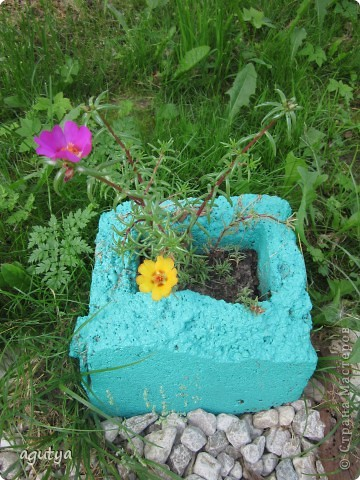 Божья коровка - камушек. Живёт на камне рядом с игрушечной лягухой. фото 2