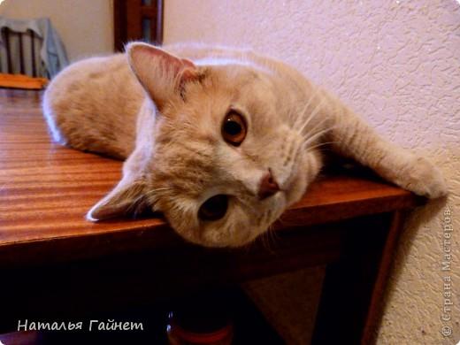 Наш котик сегодня получил уютную подстилку в свою любимую постельку. фото 13