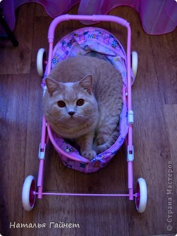 Наш котик сегодня получил уютную подстилку в свою любимую постельку. фото 14