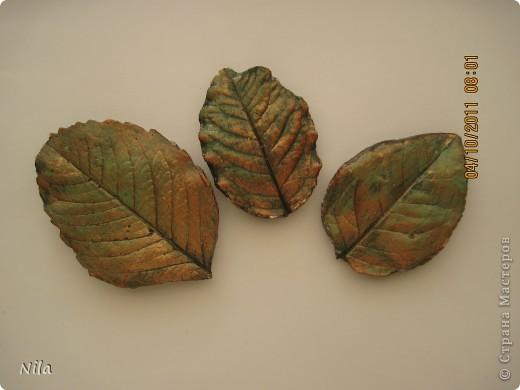 Добралась я и до гипса. Давно хотела попробовать . И пока листья не засохли успела таки пару отлить ( в смысл- из гипса). фото 3