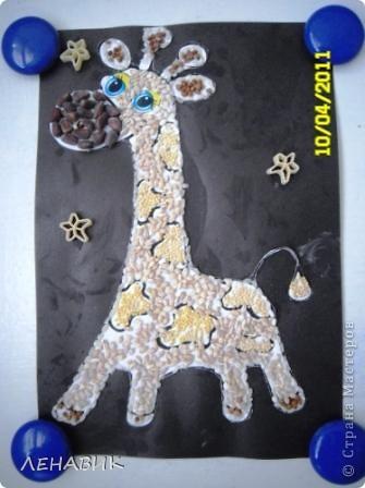 Жирафка фото 5