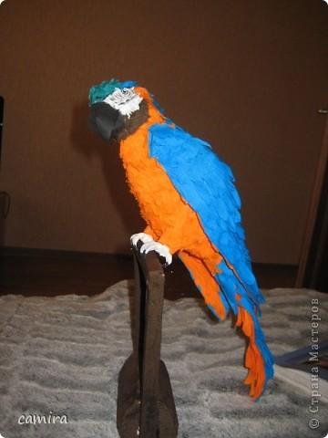 мои попугаи фото 1