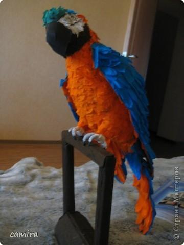 мои попугаи фото 5