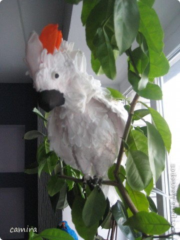 мои попугаи фото 4