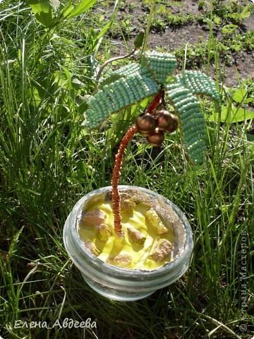 мини-пальма с кокосами  фото 1