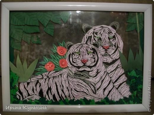тигры фото 1