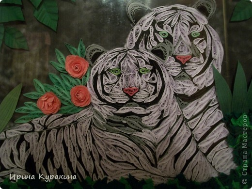 тигры фото 3