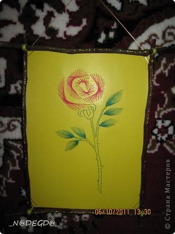 Роза счастья ;)) фото 1