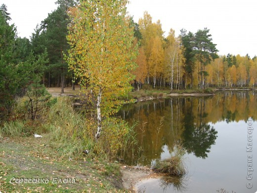 Недалеко от нашего города, в лесу есть очень красивое озеро.  Предлагаю Вам полюбоваться пейзажами. К сожалению была пасмурная погода, представляете, как было бы красиво в солнечный день! С фотоаппаратом я обошла вокруг озера. Вот что я наснимала. фото 8
