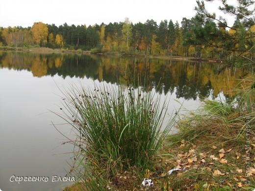 Недалеко от нашего города, в лесу есть очень красивое озеро.  Предлагаю Вам полюбоваться пейзажами. К сожалению была пасмурная погода, представляете, как было бы красиво в солнечный день! С фотоаппаратом я обошла вокруг озера. Вот что я наснимала. фото 9
