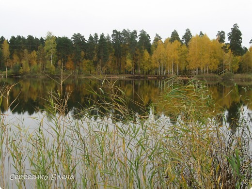 Недалеко от нашего города, в лесу есть очень красивое озеро.  Предлагаю Вам полюбоваться пейзажами. К сожалению была пасмурная погода, представляете, как было бы красиво в солнечный день! С фотоаппаратом я обошла вокруг озера. Вот что я наснимала. фото 12