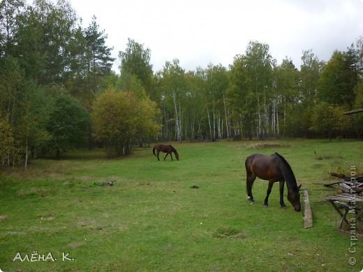 На прошлой неделе получилось выбраться в гости к брату) Живет в лесу, работает егерем, вместе с женой держат лошадей и обучают верховой езде. Жена - профессиональный тренер по конному спорту. фото 3