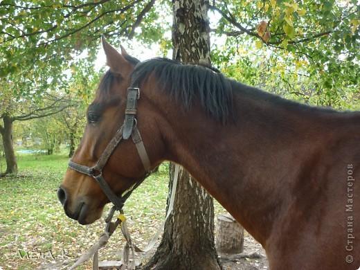 На прошлой неделе получилось выбраться в гости к брату) Живет в лесу, работает егерем, вместе с женой держат лошадей и обучают верховой езде. Жена - профессиональный тренер по конному спорту. фото 1