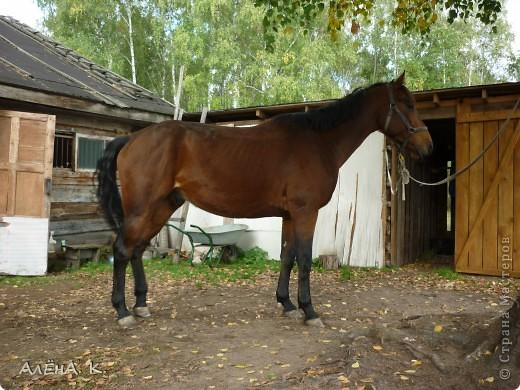 На прошлой неделе получилось выбраться в гости к брату) Живет в лесу, работает егерем, вместе с женой держат лошадей и обучают верховой езде. Жена - профессиональный тренер по конному спорту. фото 2