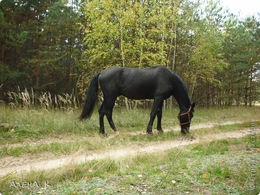 На прошлой неделе получилось выбраться в гости к брату) Живет в лесу, работает егерем, вместе с женой держат лошадей и обучают верховой езде. Жена - профессиональный тренер по конному спорту. фото 5