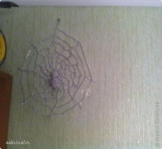 паук на паутине фото 3
