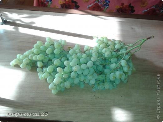 Виноградная гроздь фото 1