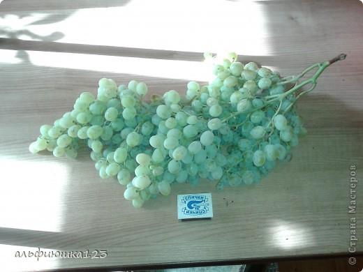 Виноградная гроздь фото 2