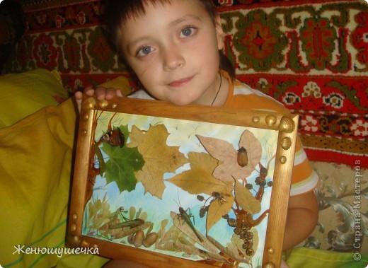 наглядное пособие к докладу...Засушеные майский жук, шершень, богомол, 2 саранчи, бабочка-павлиний глаз. фото 1