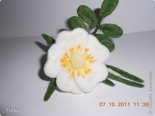Родилась вторая цветочная брошечка. Тоже шиповник, только белый. фото 2