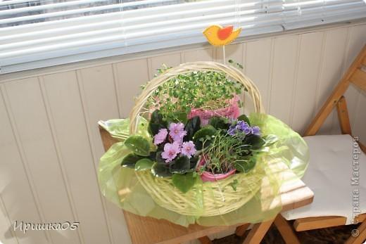 Вот такой практичный букетик получился у меня. Мама просила не покупать ей живые цветы, а лучше подарить очередную фиалку для коллекции :) Поэтому родилась вот такая композиция. Зелень – рассада редиски, ее можно срезать и отправить в салатик :) Идею букета из рассады взяла здесь http://mastera-rukodeliya.ru/flora/jivye-cvety/755-buket-iz-rassady.html , остальное уже полет фантазии. фото 1