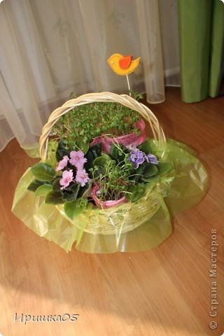 Вот такой практичный букетик получился у меня. Мама просила не покупать ей живые цветы, а лучше подарить очередную фиалку для коллекции :) Поэтому родилась вот такая композиция. Зелень – рассада редиски, ее можно срезать и отправить в салатик :) Идею букета из рассады взяла здесь http://mastera-rukodeliya.ru/flora/jivye-cvety/755-buket-iz-rassady.html , остальное уже полет фантазии. фото 3
