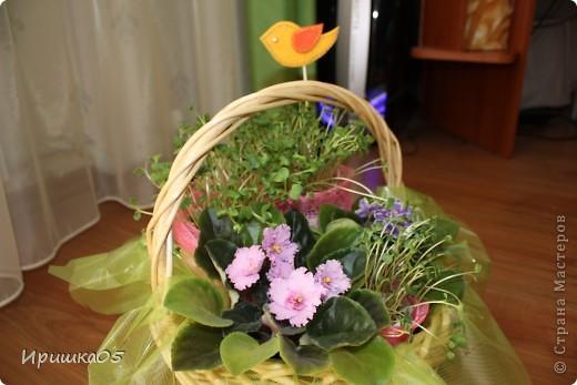Вот такой практичный букетик получился у меня. Мама просила не покупать ей живые цветы, а лучше подарить очередную фиалку для коллекции :) Поэтому родилась вот такая композиция. Зелень – рассада редиски, ее можно срезать и отправить в салатик :) Идею букета из рассады взяла здесь http://mastera-rukodeliya.ru/flora/jivye-cvety/755-buket-iz-rassady.html , остальное уже полет фантазии. фото 4