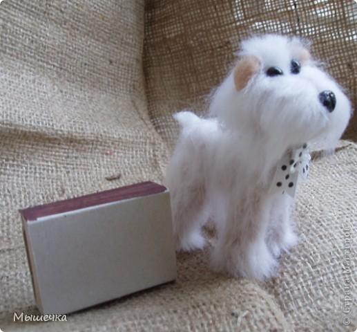 Добрый день! Будем знакомы, это Снежок. Маленькая собачка неведанной мне породы. фото 4