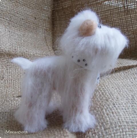 Добрый день! Будем знакомы, это Снежок. Маленькая собачка неведанной мне породы. фото 3