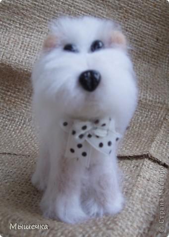 Добрый день! Будем знакомы, это Снежок. Маленькая собачка неведанной мне породы. фото 2