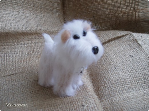 Добрый день! Будем знакомы, это Снежок. Маленькая собачка неведанной мне породы. фото 1