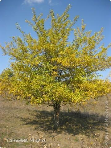 Люблю собирать шиповник. А осень у нас сейчас - просто сказочная!!!!! Тепло и буйство осенних красок.... фото 16