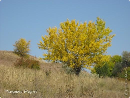 Люблю собирать шиповник. А осень у нас сейчас - просто сказочная!!!!! Тепло и буйство осенних красок.... фото 17