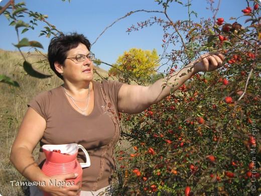 Люблю собирать шиповник. А осень у нас сейчас - просто сказочная!!!!! Тепло и буйство осенних красок.... фото 21